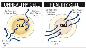 healthyvsunhealthycell